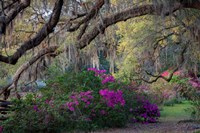Oaks and Azaleas Fine Art Print