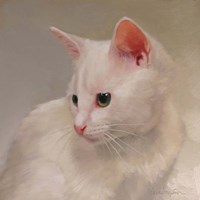 White Kitten Fine Art Print