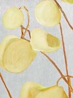 Milkweed on Pale Gray Fine Art Print