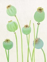 Poppy Pods on Ecru Fine Art Print