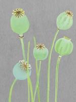 Poppy Pods on Grey Fine Art Print