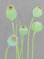 Poppy Pods on Grey Fine Art Print