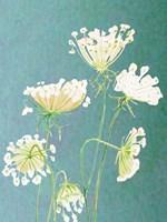 Queen Anne's Lace Fine Art Print