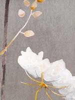White Flower on Medium Gray Fine Art Print