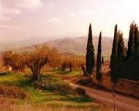 Toscana, Italia No. 709 Fine Art Print