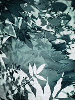 Abstract Leaves Fine Art Print