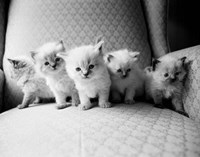 Five Kittens Fine Art Print