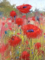 In the Poppy Field Fine Art Print