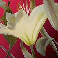 Lily Red Fine Art Print