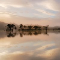 Dawn Mist on the Amazon Fine Art Print