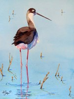 Black Neck Stilt III Fine Art Print