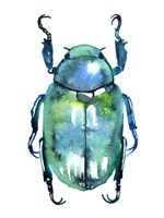 Chromatic Blue Beetle Fine Art Print