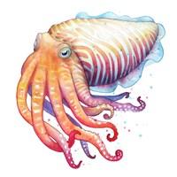 Cuttlefish Fine Art Print