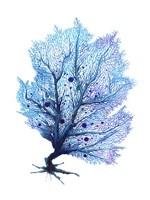 Fan Coral - Blue Fine Art Print