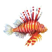 Firefish Fine Art Print