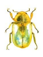 Golden Beetle Fine Art Print