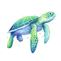Green Sea Turtle Fine Art Print