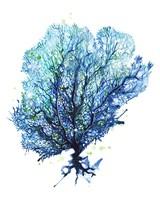 Sea Fan - Aqua Fine Art Print
