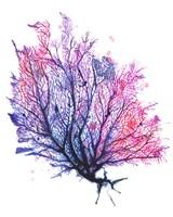 Sea Fan - Purple Fine Art Print