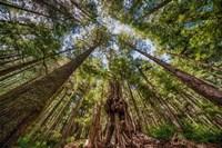 Avatar Grove Canopy Fine Art Print