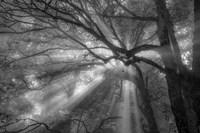 Forest Fog Fine Art Print