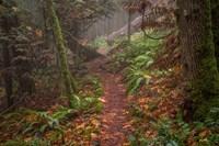 Forest Stroll Fine Art Print