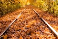 Train Tracks in The Fall Fine Art Print