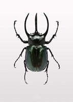 Beetle 2 Fine Art Print
