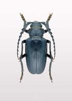Beetle 3 Fine Art Print