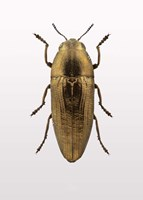 Beetle 4 Fine Art Print
