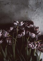 Dark Tulips Fine Art Print