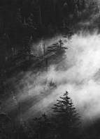 Misty Pine Woods Fine Art Print