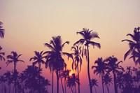Palm Sky 1 Fine Art Print