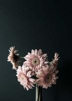 Pink Black Fine Art Print