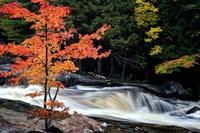 Autumn, Lower Rosseau Falls Fine Art Print