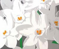 Paperwhites Fine Art Print