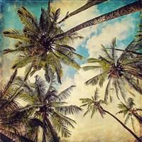 Kauai Island Palms Fine Art Print
