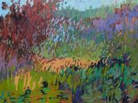 Color Field No. 72 Fine Art Print