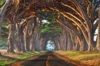 Tunnel of Light Fine Art Print