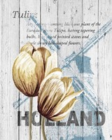 Holland Tulips Fine Art Print