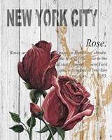New York Roses Fine Art Print