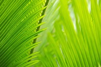 Fern Tips Fine Art Print