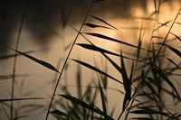 Twilight Grasses Fine Art Print