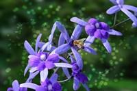 Bee and Purple Flowers Fine Art Print