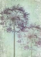 Allium Globe Master Fine Art Print