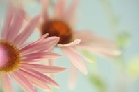 Daisy Days Fine Art Print