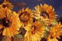 Sunflower Fine Art Print