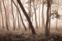 Reticent Woods Fine Art Print