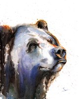 Bear Portrait Fine Art Print