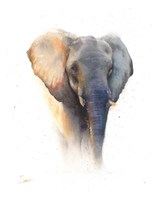 Elephant Watercolor Fine Art Print